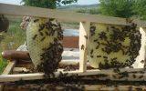Toplu Arı Ölümleri Yaşanıyor