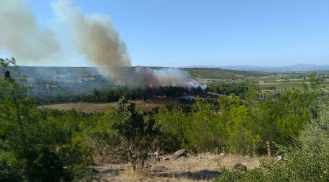 Bu kez ağaçlandırma sahasında yangın çıktı